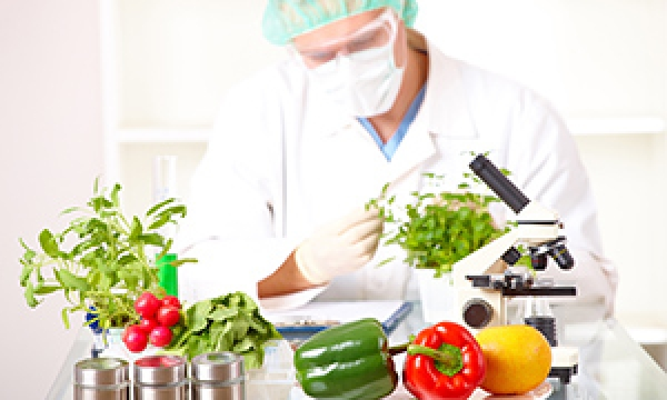 Brazil And Denmark To Support Joint Research In Food Science Incobra